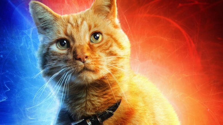 captain-marvel-cat-name-goose