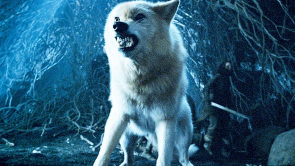 Game Of Thrones Season 8 Ghost the Direwolf Is the Best Choice for the Iron Throne