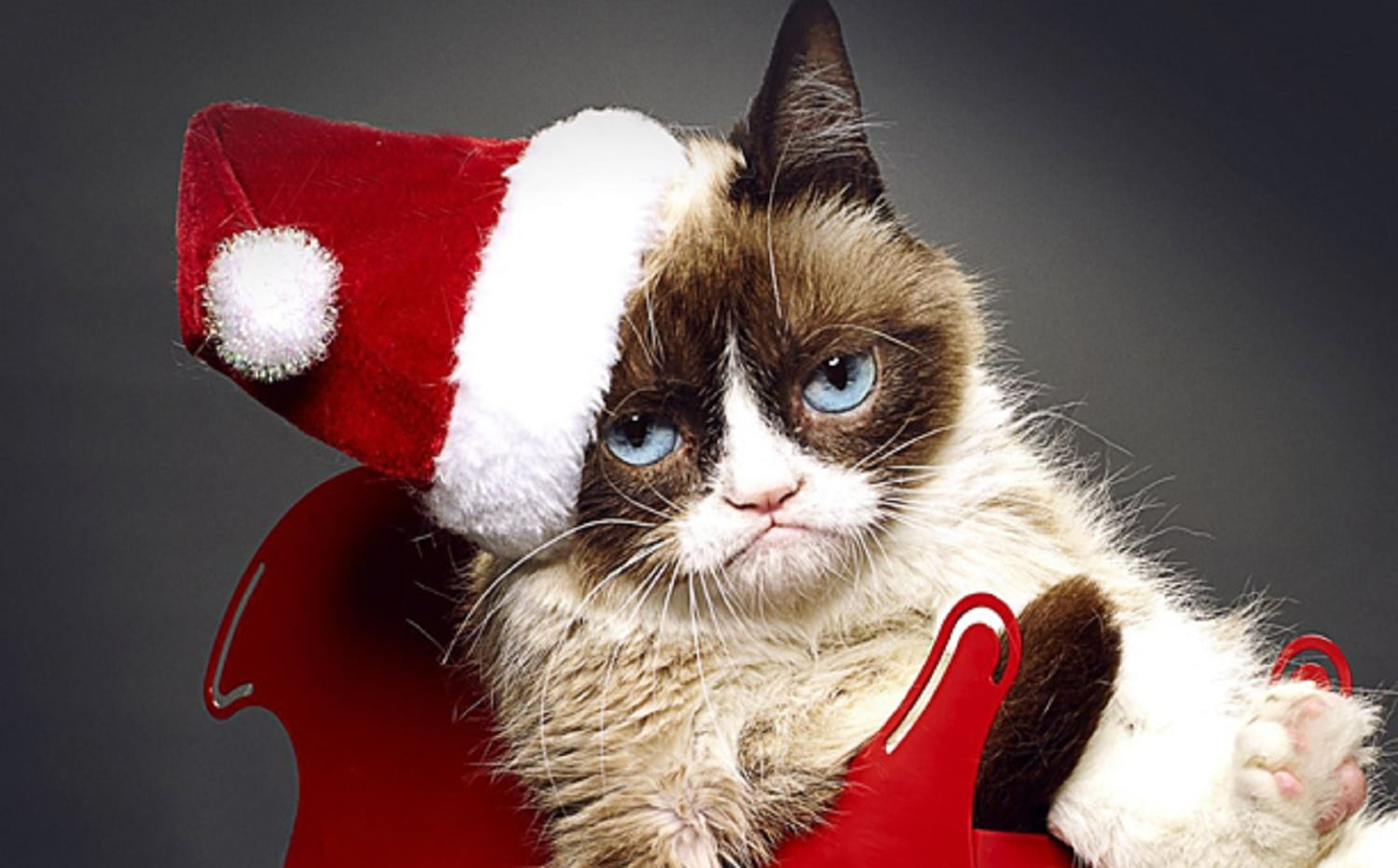 Grumpy Cat, Internet Celebrity and Movie Star, Dies at 7
