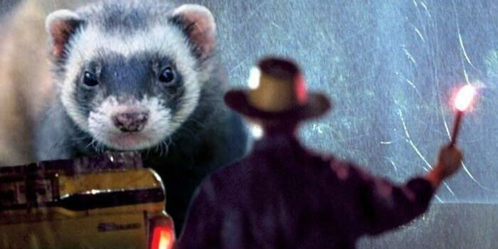 Someone replaced Dinosaurs with Ferrets in Jurassic Park, and it's adorable & funny